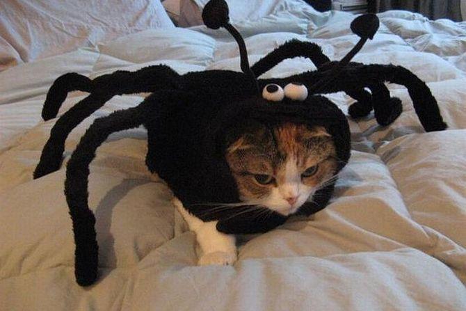 Ужасно милые: коты и Хэллоуин 25