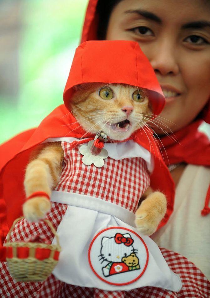 Ужасно милые: коты и Хэллоуин 26