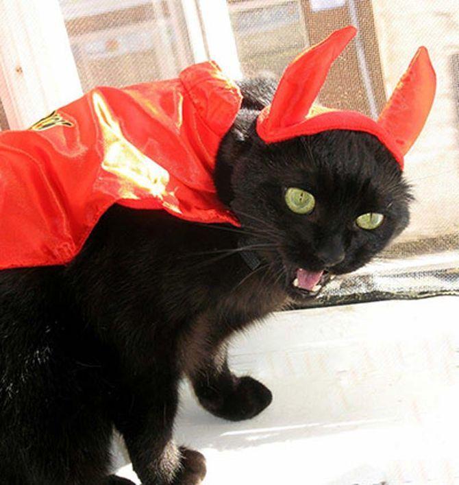 Ужасно милые: коты и Хэллоуин 27