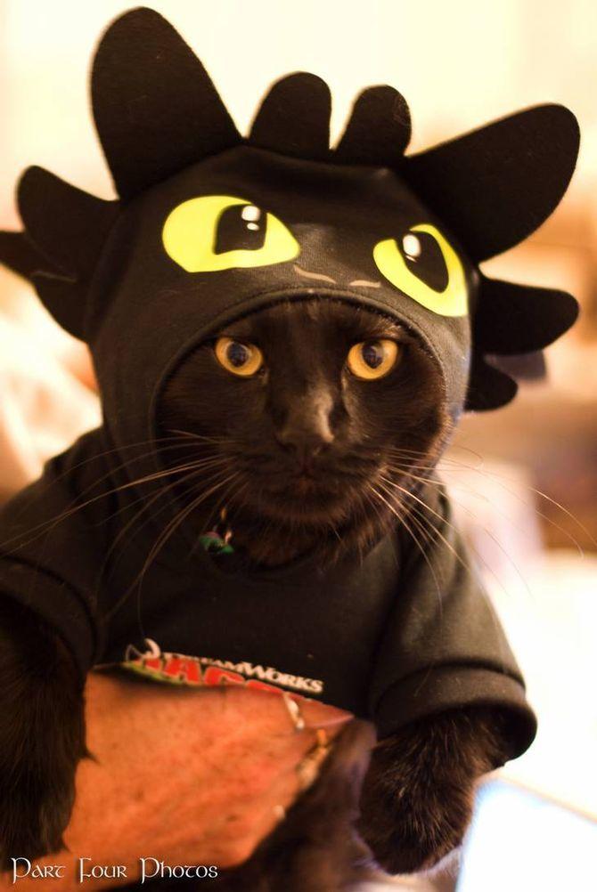 Ужасно милые: коты и Хэллоуин 28