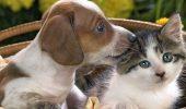 Всесвітній день домашніх тварин – красиві привітання