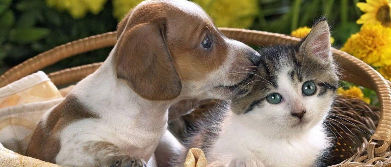 Всемирный день домашних животных – красивые поздравления