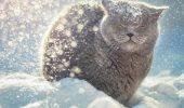 З першим днем зими! Красиві привітання