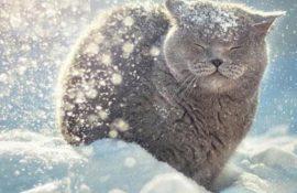 С первым днем зимы! Красивые поздравления