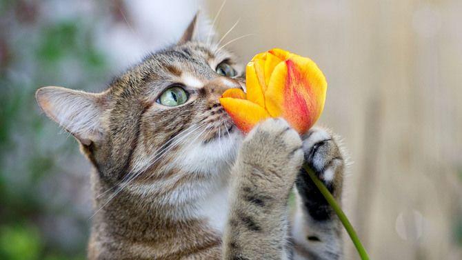 Аромакология или Как достичь эмоционального благополучия с помощью ароматов 7