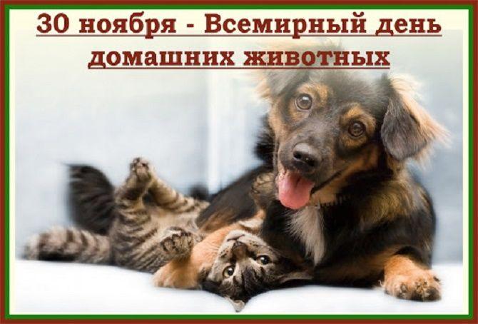 Всемирный день домашних животных – красивые поздравления 1