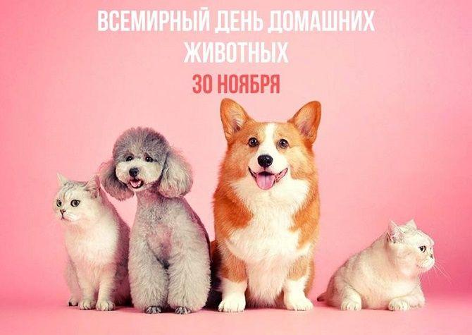 Всемирный день домашних животных – красивые поздравления 4