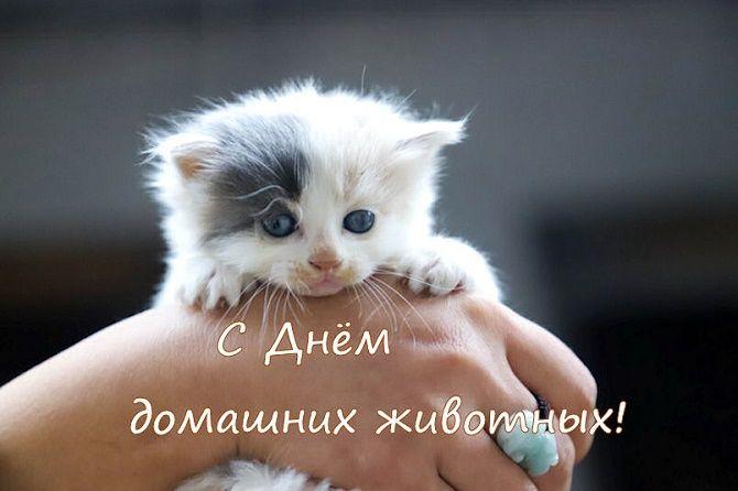 Всемирный день домашних животных – красивые поздравления 5