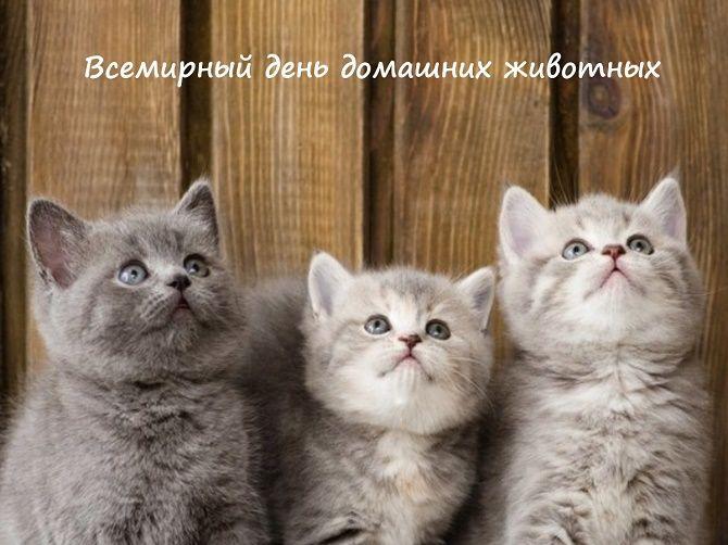 Всемирный день домашних животных – красивые поздравления 7