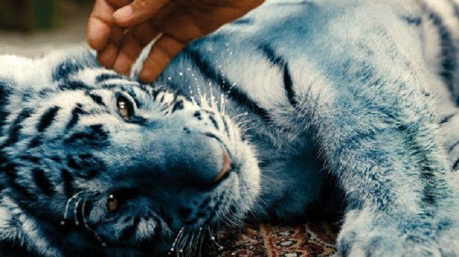 Полосатые хищники: лучшие фильмы о тиграх 2