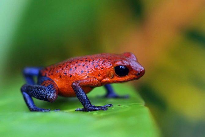 10 самых необычных обитателей амазонских джунглей 1