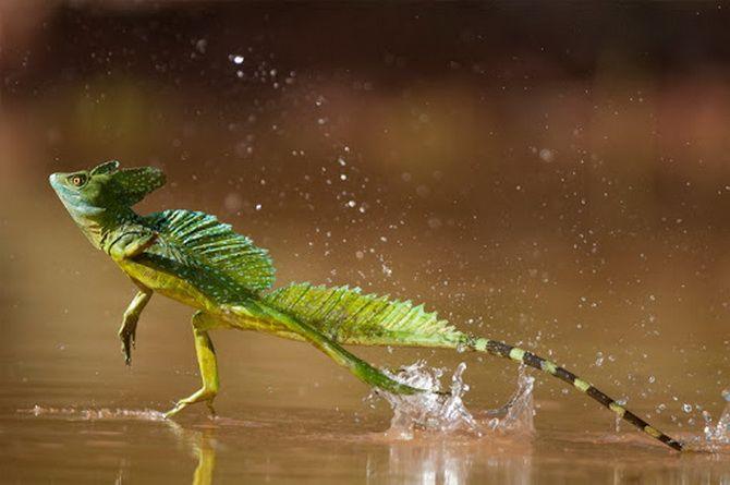 10 самых необычных обитателей амазонских джунглей 2