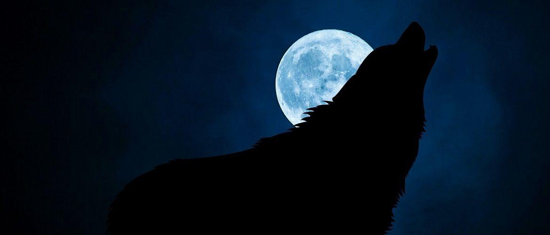 Полнолуние в январе 2021 года – что нам готовит Луна Волка