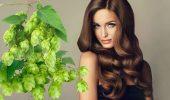 Оздоровление волос с помощью хмеля: лучшие рецепты, советы и рекомендации