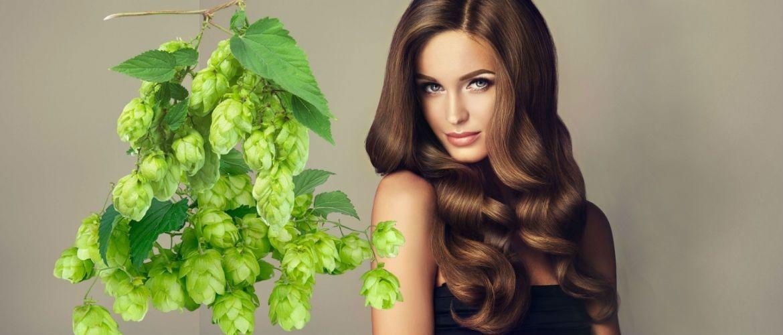 Оздоровлення волосся за допомогою хмелю: кращі рецепти, поради та рекомендації