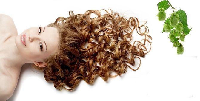 Оздоровление волос с помощью хмеля: лучшие рецепты, советы и рекомендации 3