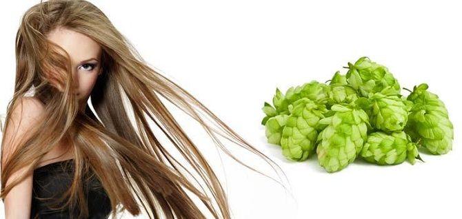 Оздоровление волос с помощью хмеля: лучшие рецепты, советы и рекомендации 6