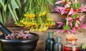 Чашка крепкого здоровья: самые полезные чаи с травами