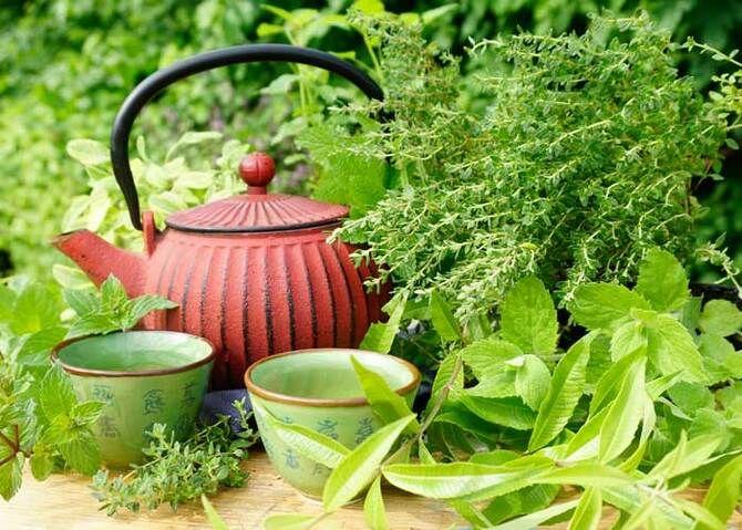 Чашка крепкого здоровья: самые полезные чаи с травами 6