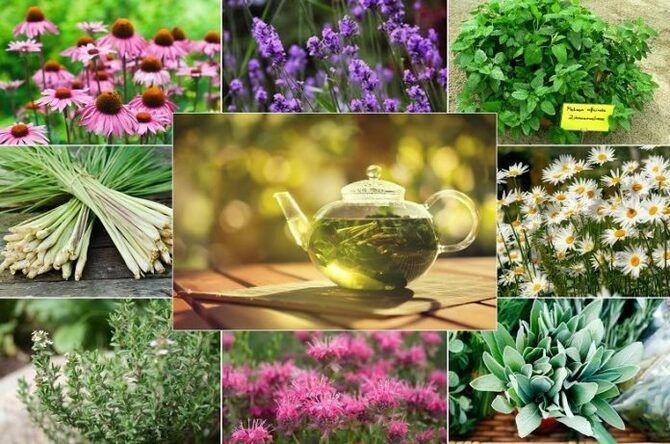 Чашка крепкого здоровья: самые полезные чаи с травами 8