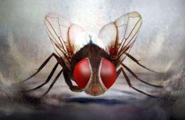 10 самых необычных и фантастических фильмов про насекомых