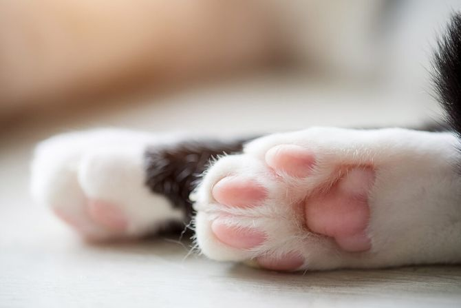 36 дивовижних фактів про кішок 7