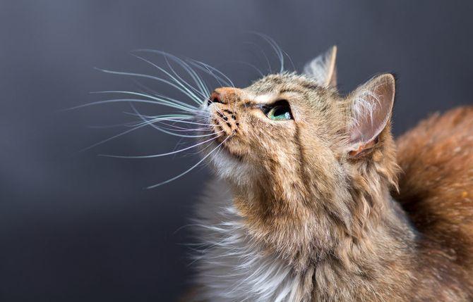 36 дивовижних фактів про кішок 6