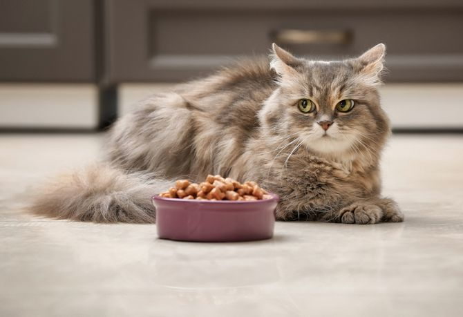 36 дивовижних фактів про кішок 9