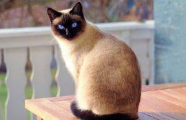 36 удивительных фактов о кошках