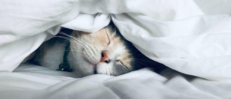 «Не будите меня», или Почему кошки так много спят