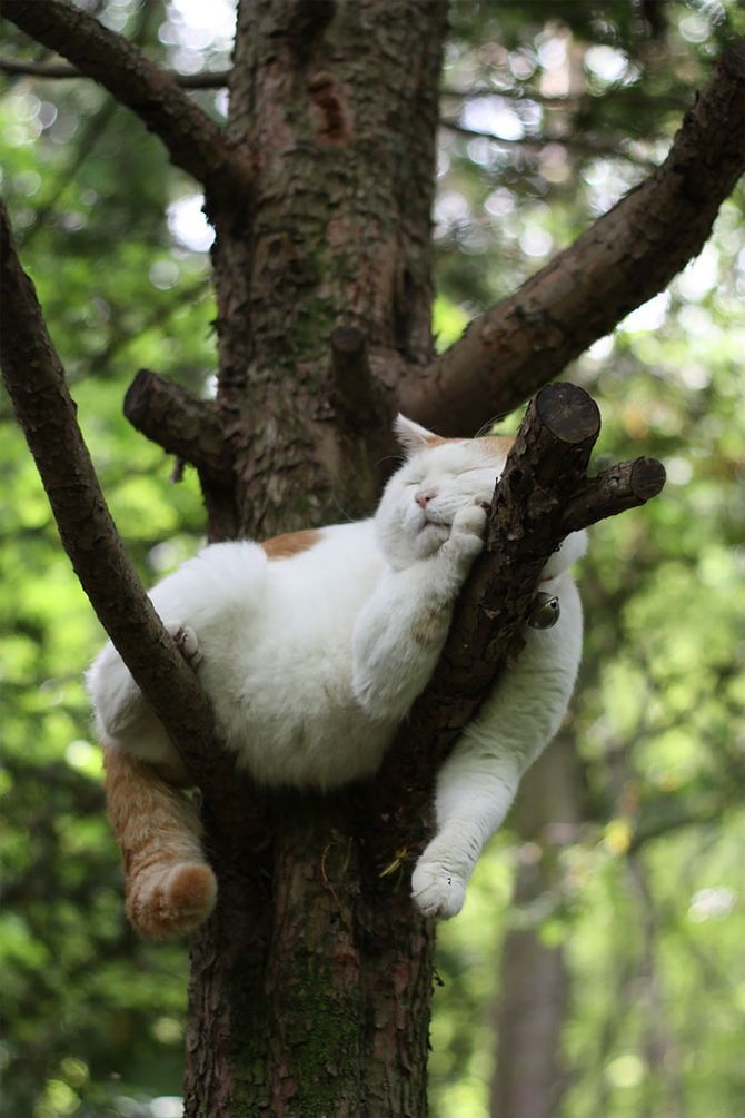«Не будите меня», или Почему кошки так много спят 3