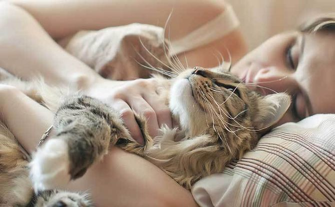 Чем полезно для нас кошачье мурлыканье 5