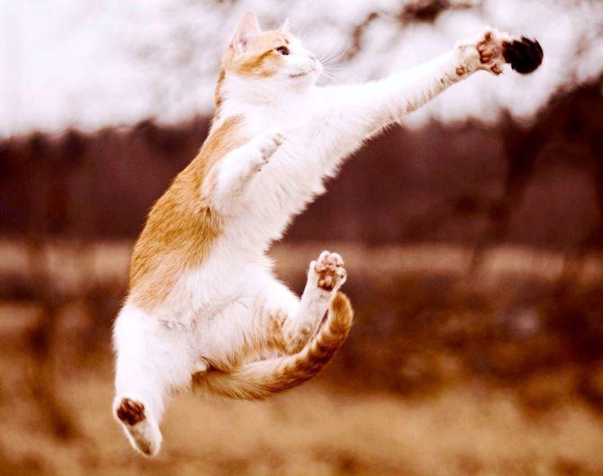 36 дивовижних фактів про кішок 4