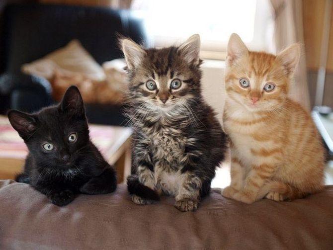36 дивовижних фактів про кішок 10