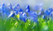 Прикольные поздравления с Первым днем весны