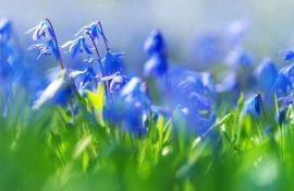 Прикольні привітання з Першим днем весни
