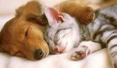 Международный день сна: яркие и оригинальные поздравления