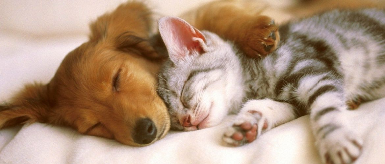 Міжнародний день сну: яскраві та оригінальні привітання