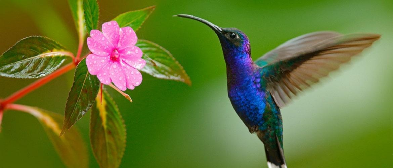 Всесвітній день птахів: красиві привітання