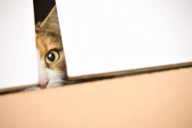 10 главных кошачьих страхов 3
