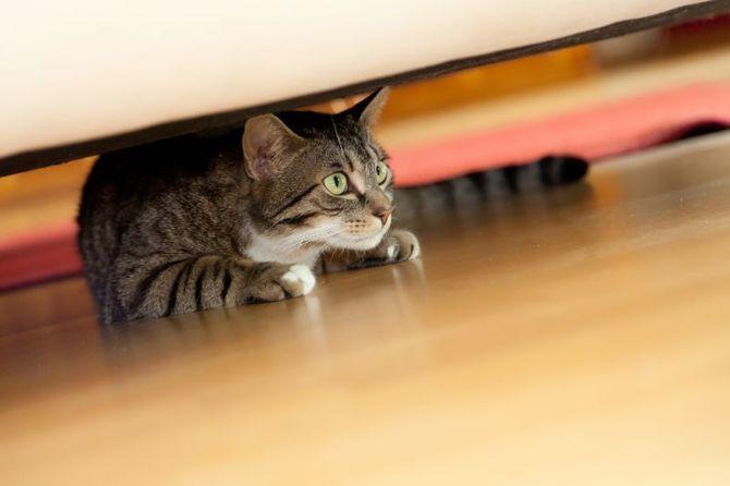 10 главных кошачьих страхов 4