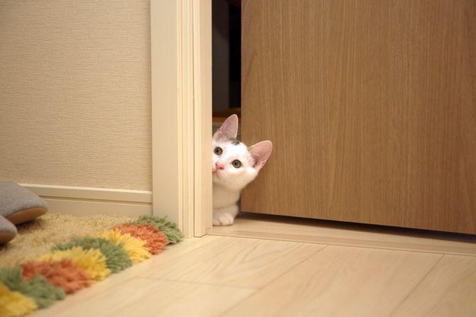 10 главных кошачьих страхов 6