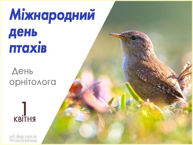 Всесвітній день птахів: красиві привітання 3