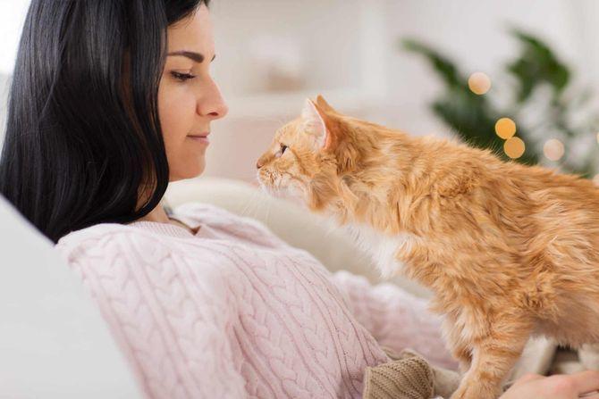 Що це означає: ТОП-25 цікавих фактів про котячу поведінку 4