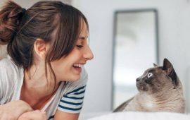 Що це означає: ТОП-25 цікавих фактів про котячу поведінку