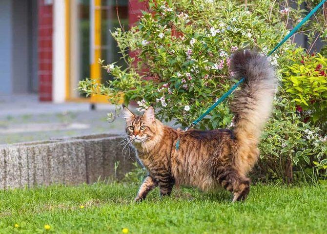 Що це означає: ТОП-25 цікавих фактів про котячу поведінку 2
