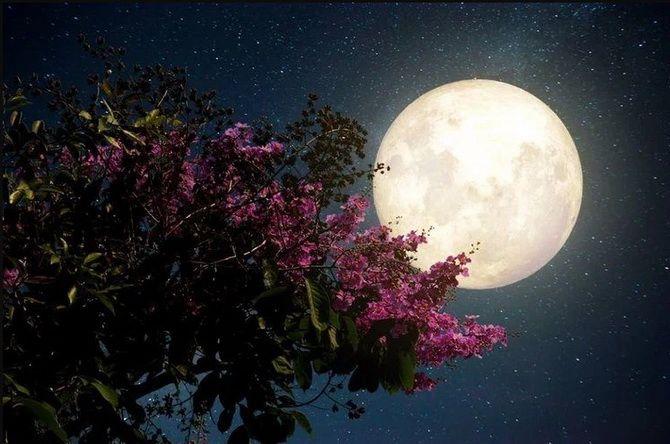 Полнолуние в апреле: Суперлуние и Розовая луна 2021 1