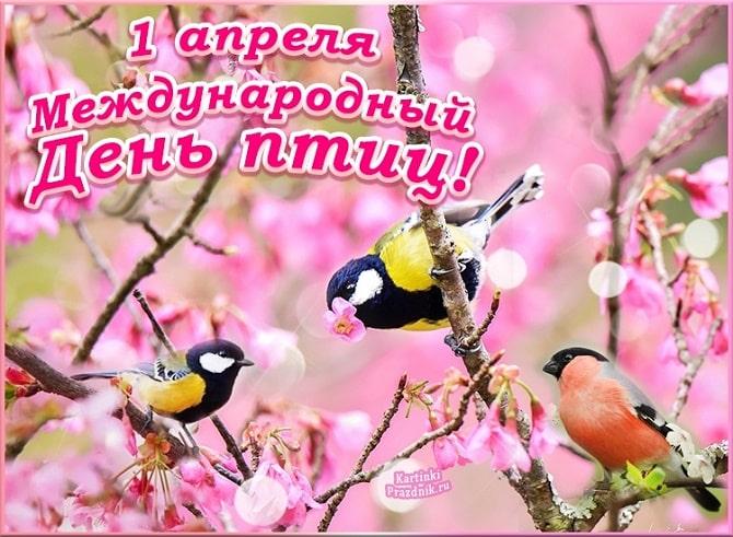 Всемирный день птиц: красивые поздравления 4