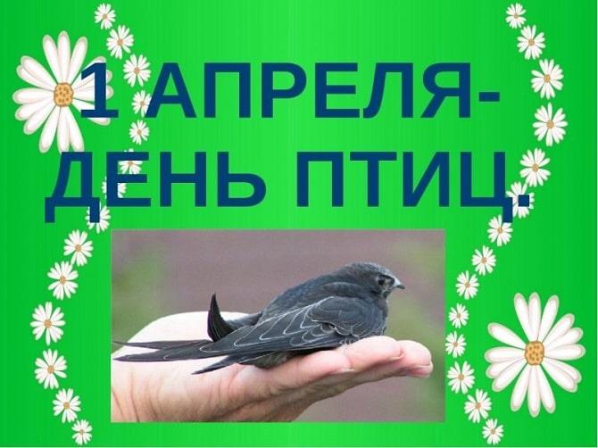 Всемирный день птиц: красивые поздравления 6