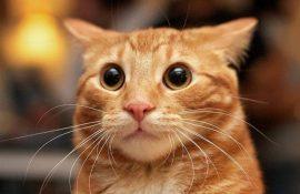 10 головних котячих страхів